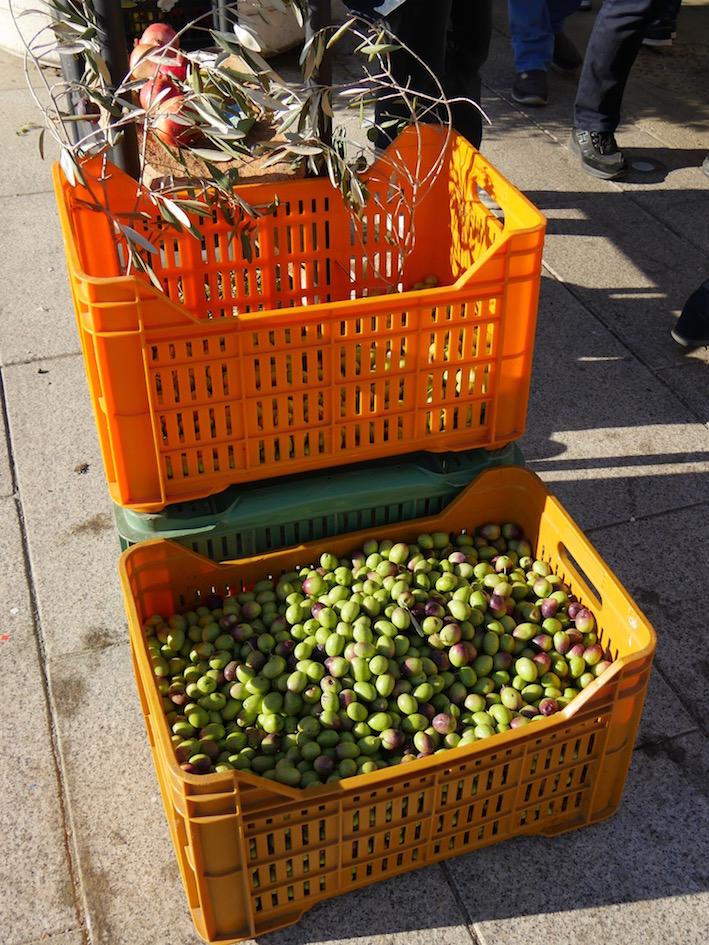 Die Olivenernte hat begonnen.