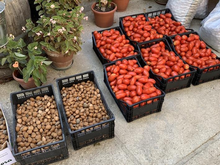 Diese Mandeln (für die Dolci) und Tomaten (als eingekochter Sugo) kommen in die Vorratskammer der Trattoria Zia Luciana.