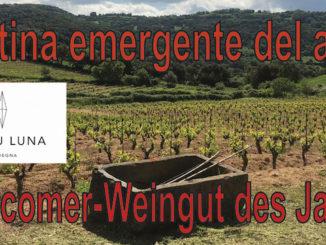 Italiens Newcomer-Weingut des Jahres